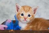 Kitten in basket — Stock Photo