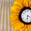 Foto Stock: Clock in sunflower