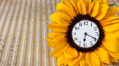 Clock in sunflower — Stock Photo