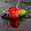Red flower fall in water — Stock Photo