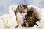 Kitten closed in towel — Stock Photo