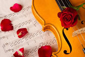 Violine noten und rose — Stockfoto