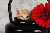 Kitten in black kettle — Stock fotografie