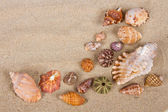 Conchas do mar em estúdio — Fotografia Stock
