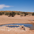 Water hole for animals in the desert — Stock Photo