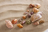 Sea shells in studio — Stock Photo