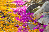 Purple and orange flower lying on pathway — Stock Photo