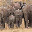 Stock Photo: Breeding herd of elephant walking away int trees