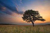 Lovely grasland sunset with tree and bright colours clouds — Stock Photo