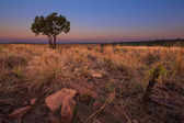 Magical sunset in Africa with a lone tree on a hill and louds — Stock Photo