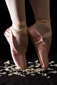 A ballet dancer standing on toes on rose petals with black backg — Stock Photo