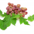 Grapes with green leaves on a white background - Stock Photo