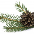 Spruce branch with cones — Stock Photo #18946127