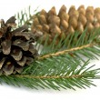 Spruce branch with cones - Foto de Stock