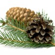 Spruce branch with cones — Stock Photo #18946173