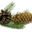 Spruce branch with cones — Stock Photo #18946223