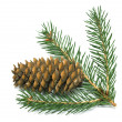 Spruce branch with cones — Stock Photo #18946251