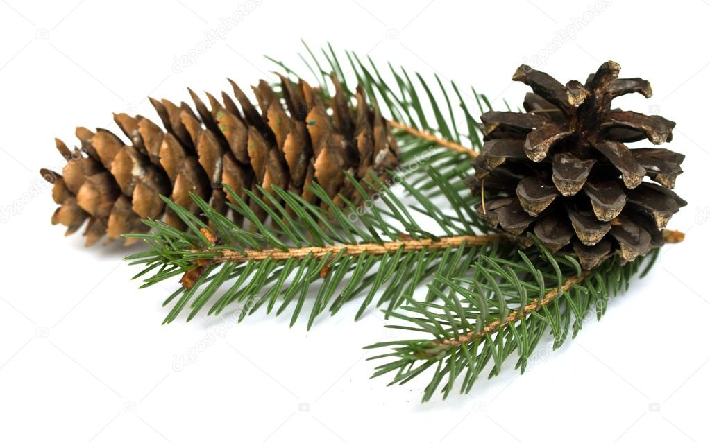 Spruce branch with cones — Stock Photo #18946201