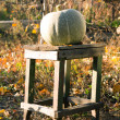 Pumpkin on a wooden chair — Stock Photo