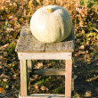 Pumpkin on a wooden chair - Stock fotografie