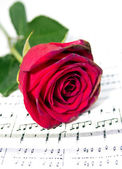 Roses on sheets of musical notes close up — Stock Photo