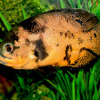 Fish in the aquarium - Stockfoto