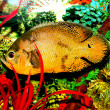 Fish in the aquarium - 图库照片
