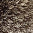 Stock Photo: Fur texture