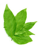 Green bay leaf on a white background — Stock Photo