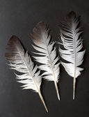 Bird feather — Stock Photo