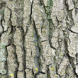 Tree bark background — Stock Photo