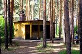 Toras de madeira — Foto Stock