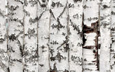 Birch wood fence texture — Stock Photo