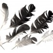 Feather of bird — Stock Photo #37327519