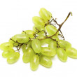 Cluster of White Muscat Grapes — Stock Photo
