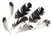 Feather of a bird — Stock Photo