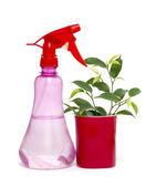 Ficus Benjamina flower and sprinkling can — Foto Stock