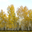 Stock Photo: Autumn forest landscape