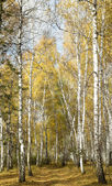 Autumn forest landscape — Stock Photo