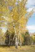 Autumn forest landscape — Stock Photo