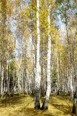 осенний пейзаж лес — Стоковое фото