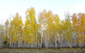 Herfst boslandschap — Stockfoto