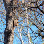 Blank wooden nesting box in spring — Stock Photo