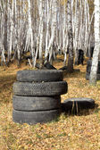 Automobile tyre in forest — Stock Photo