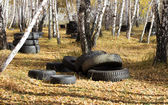Automobile tyre in forest — Stockfoto