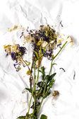 Dry flowers — Stock Photo