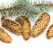 Pine cones with branch — Stock Photo #37582523