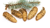 Pine cones with branch — Stock fotografie