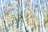 Nature — Stock Photo
