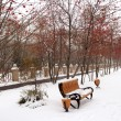 Winter park with bench and tree with rowan — Stock Photo #37592207